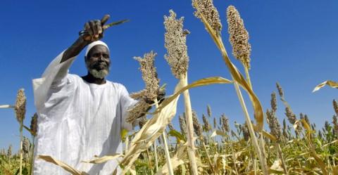 Sorgum farmer in Sudan. © UN Photo/ Fred Noy